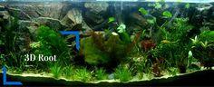 At Aqua Maniac's we sell fish tank decoration for all fish keepers. We do 3D aquarium backgrounds to fit any aquarium size. We stock aquarium ornaments including aquarium natural stones. http://www.aqua-maniac.com