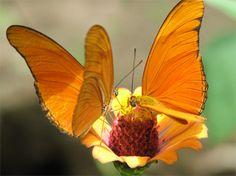 butterflies, Nicaragua