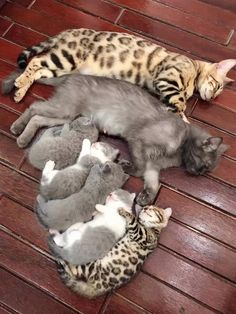 Cute Baby Cats, Cute Kittens, Cute Little Animals, Cute Funny Animals, Cats And Kittens, Funny Cats, Funny Humor, Animals Images, Animals And Pets