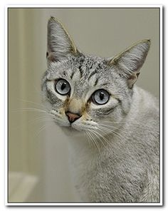 The best way to celebrate Adopt a Shelter cat month is toadopt a shelter cat.