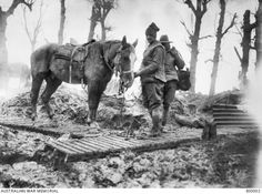 WWI; An artillery horse used for transporting ammunition to the guns and its unidentified Australian driver on a duckboard track between Mametz and Montauban. December, 1916.