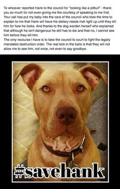 """Family dog Hank has been confiscated by police for """"looking like a pit bull"""" because of Breed Specific Legislation (BSL). Help save him from being condemned to death."""