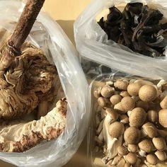 Enoki tortulhos e trombetas (trompetas?) negros que vieram comigo do mercado #adoro #cogumelos #food #mercado