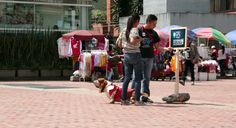 GPS Hush Puppies: Cute Puppy Lead People To Hush Puppies Store in Colombia