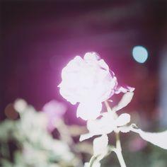 川内倫子展 照度 あめつち 影を見る | EXHIBITION | IMA ONLINE