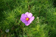 Artikel zum Verkauf von schorschi_dk auf ebay.de #Verkauf #Verkaufen #ZuVerkaufen #eBayKleinanzeigen # Privatverkauf #Sofortkauf #Kleinanzeigen Purple Flower Arrangements, Purple Flowers, Garden Projects, Garden Design, Green Garden, Plants, Pink, Color, Planting Flowers