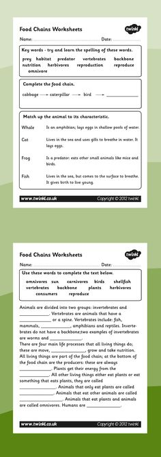 Food chains- Food chain worksheets