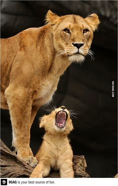 Learning to roar