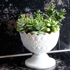 Terrific DIY Thrift Store Upcycles and Makeovers. Succulents in milk glass bowl