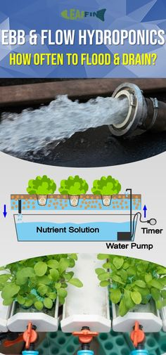 Ebb & Flow Hydroponics Watering Schedule: How Often to Flood & Drain? Ebb And Flow Hydroponics, Hydroponics System, Aquaponics Diy, Hydroponic Gardening, Plant Growth, Dry Clay, Growing Plants, Cool Things To Make, Herbs