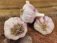 Garlic-Sinnamahone from Rural Pennsylvania Home Remedies For Bronchitis, Garlic Tea, Garlic Bulb, Seeds Online, Rare Flowers, Garden Seeds, Natural Home Remedies, Dream Garden, Drinking Tea