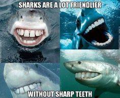 Sharks are a lot friendlier... #Drjsbraceplace