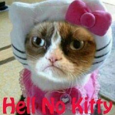 Hell no kitty funny grumpy cat meme Grumpy Cat Quotes, Funny Grumpy Cat Memes, Funny Animal Jokes, Funny Animal Pictures, Cute Funny Animals, Cute Cats, Funny Cats, Funny Memes, Grumpy Kitty