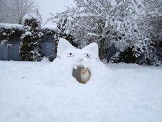 little kitty snow fort