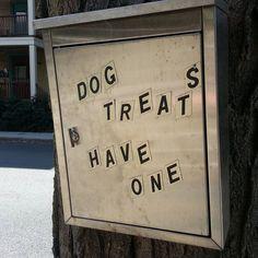 #dog treats on a tree! Only in #cambridge  #cambma #cambridgema #massachusetts by ksplitintwok September 19 2015 at 01:05PM
