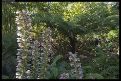jardin btannnique du chateau de Vauville (Manche)