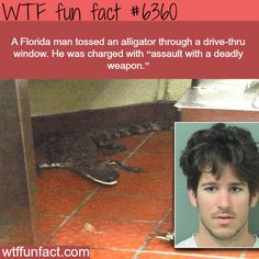 "A Florida man tossed an alligator through a drive thru window. He was charged with ""assault with a deadly weapon. Wtf Fun Facts, Funny Facts, Funny Memes, Florida Funny, Florida Man Meme, Weird But True, What The Fact, Wtf Funny, Hilarious"