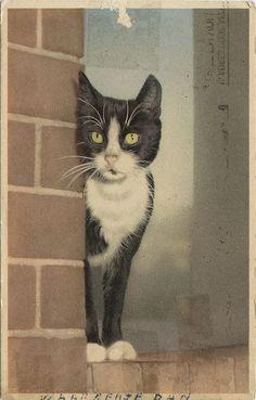ilustração gatos frajolas - Pesquisa Google