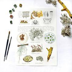 Botany, Biology, Illustrations, Illustration, Ap Biology, Illustrators
