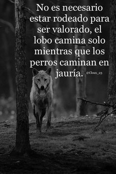 Un lobo sabe caminar solo
