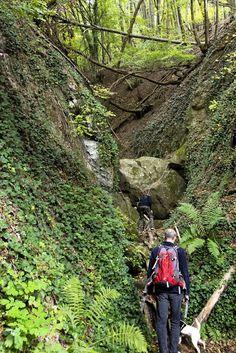 Történetek képekkel: Ahol mindden izmodat megmozgatod - kirándulás a Salabasina-árokban Mountains, Nature, Plants, Travel, Naturaleza, Viajes, Destinations, Plant, Traveling