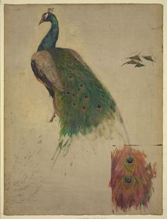 Title: [The sciences, study for peacock in tympanum, southwest gallery, decoration for the Library of Congress]  Creator(s): Cox, Kenyon, 1856-1919, artist  Date Created/Published: [1896]  Medium: 1 painting on canvas : oil, charcoal, and graphite.