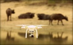 25 Amazing Photos from Nat Geo WILD's 'Safari Live' | Mental Floss The Drone