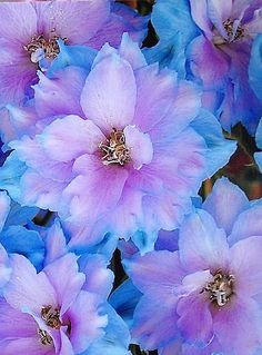 SuyzQ - Flowers and Amazing Landscapes - Delphinium amazing shades of blue Amazing Flowers, My Flower, Beautiful Flowers, Dahlia Flower, Birth Flower, Dream Garden, Trees To Plant, Beautiful Gardens, Mother Nature