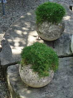 These look like concrete ball planters. Almost modern and ancient or antique at the same time.