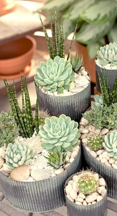 Most current Screen Garden Planters succulents Tips Pots, tubs, and half barrels stuffed with flowers add appeal to any garden, but container gardening Types Of Succulents, Succulents In Containers, Cacti And Succulents, Planting Succulents, Cactus Plants, Planting Flowers, Pot Plants, Growing Succulents, Metal Containers