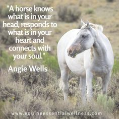 I'm a equestrian and also play the violin, it's not easy but def not impossible! Horse Love Quotes, Inspirational Horse Quotes, Horse Riding Quotes, Horse Sayings, Cute Horses, Pretty Horses, Beautiful Horses, Equine Quotes, Equestrian Quotes