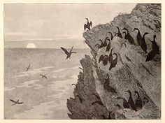 """Theodor Kittelsen - """"The Cormorant   He never seemed to have any peace of mind. Keenly acute, his head, with its lively eyes, rested on its long neck; suddenly, he took to the air as one heavily laden with secrets: flapping, flapping its wings - until finally reaching the dark, melancholy rocks."""""""