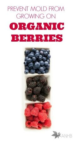 How to prevent mold from growing on organic berries.
