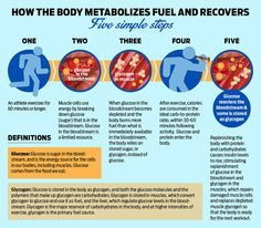 How the body metabolizes fuel