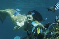 Mermaid-Charlotte-swimming-with-the-fishes-h2o-mermaids-9171099-773-513.jpg (773×513)