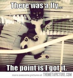 This pretty much just happened with my cat. Only thing is, we have wood blinds so I don't hate her because she didn't destroy anything. However, she caught the bug like a pro!