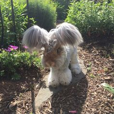 Wally the Rabbit has the Best Ears Ever (10 Photos)