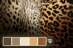 Take a walk on the wild side! Animal prints are a classic design element. See how to make them work in ways you would never expect!