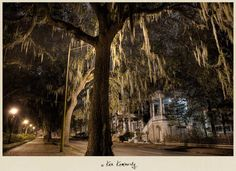"""The Haunting Beauty of Savannah at Night""  Location: Historic District, Savannah, Georgia USA"