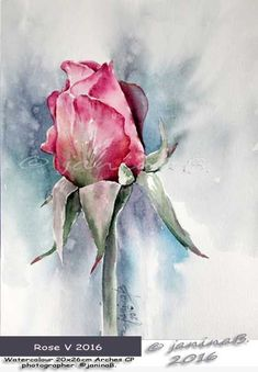 Rose V 2016 / Watercolour 20x26cm Arches CP ©janinaB. #watercolorarts