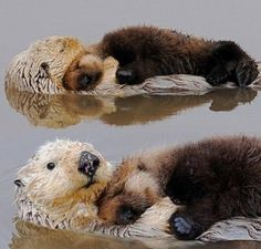 Baby Otter Waterbed- such a tender scene!