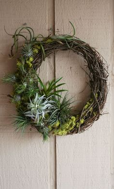 Easy To Grow Houseplants Clean the Air Build A Beautiful Tillandsia Wreath Inspired By The Rainforest Garden Perfect For Indoor Or Outdoor Home Decor. The Tillandsias Will Continue To Bloom and Grow Year After Year. Arrangements Ikebana, Flower Arrangements, Succulents Garden, Planting Flowers, Air Plant Terrarium, Terrariums, Terrarium Diy, Air Plant Display, Deco Nature