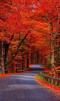 ~~autumn, the life in red | a winding blazing fall road, Canada | by Jonatàn Chipuli~~