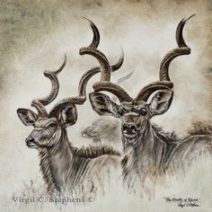 The Ghosts Of Africa, kudu, african wildlife print by Virgil C. Stephens, brand new print