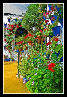 0203 cordoba borrachera de color (patios cordoba) by Pepe Gil Paradas., via Flickr