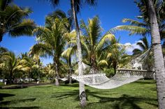 Sunshine, Coconut trees and Hammac; Relax its  Island Life  #islandlife