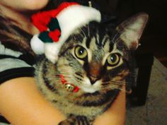 Be there with bells on! Santa Hat, Submissive, Cats, Animals, Gatos, Animales, Animaux, Animal, Cat