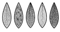 various venation patterns
