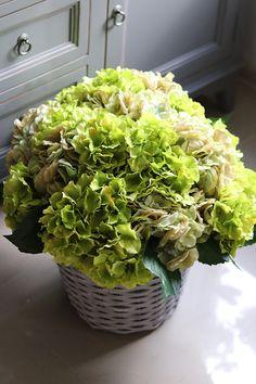 Lettuce, Cabbage, Vegetables, Food, Hydrangeas, Flowers, Veggies, Essen, Cabbages