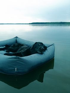 Waterproof Dog Bed SLEEPY  looks comfy i could use it